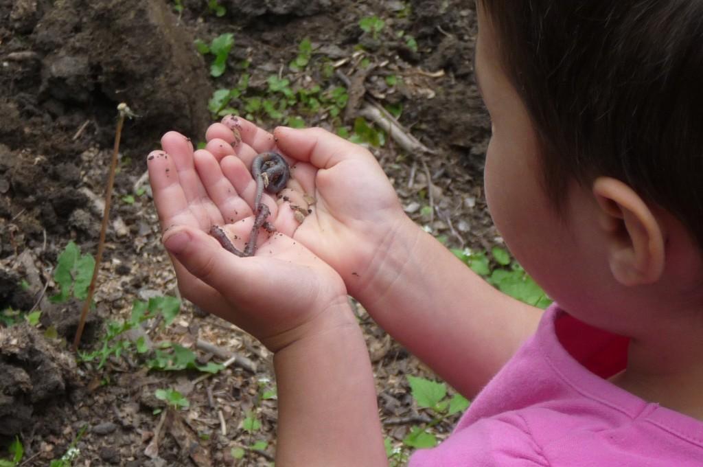 befriending worms