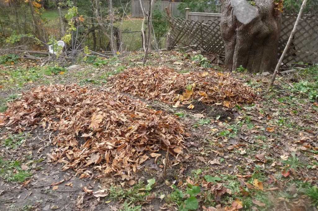 garden beds covered with leaves