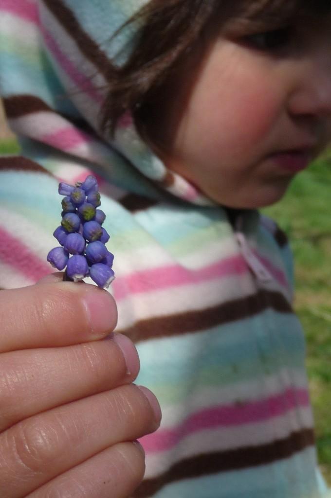 Lili picking a grape hyacinth