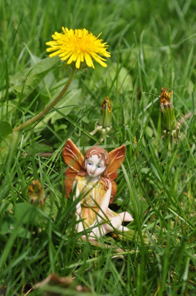 fairy one